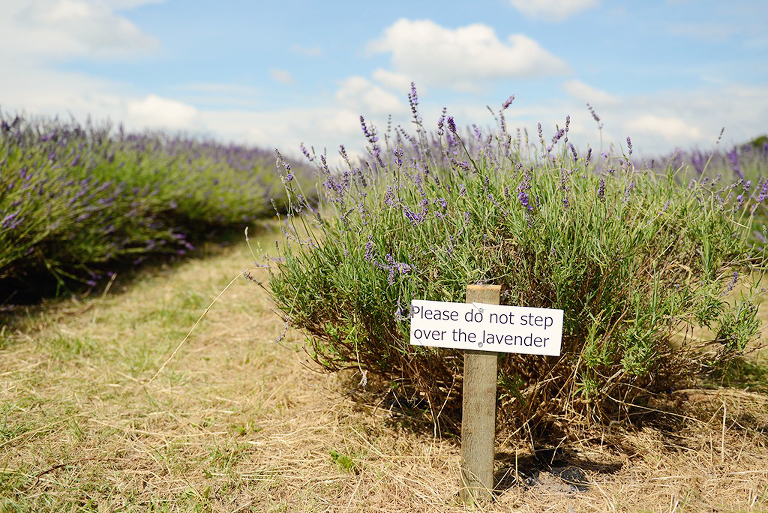 please do not step over the lavender sign in Mayfield Lavender farm Surrey