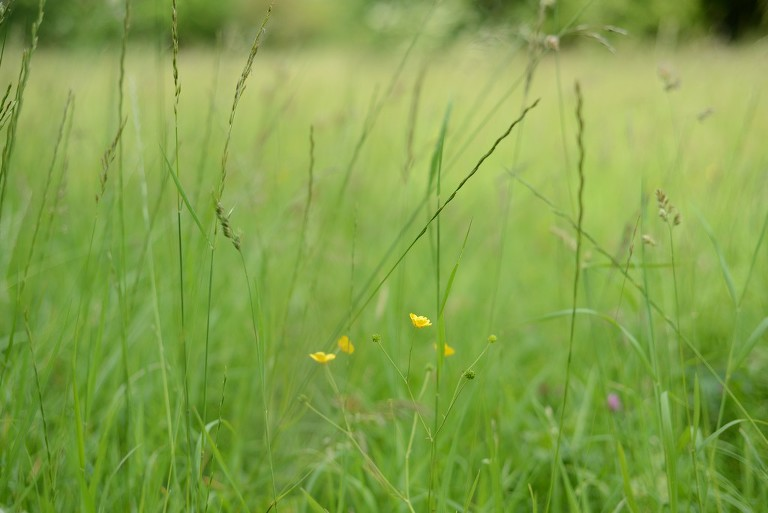 long grass with yellow flowers in a park