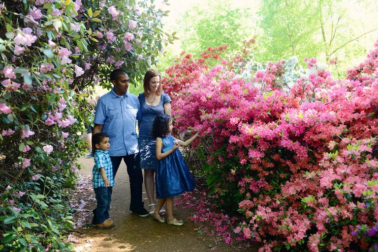 family surrounded by pink bushes in Richmond Park London
