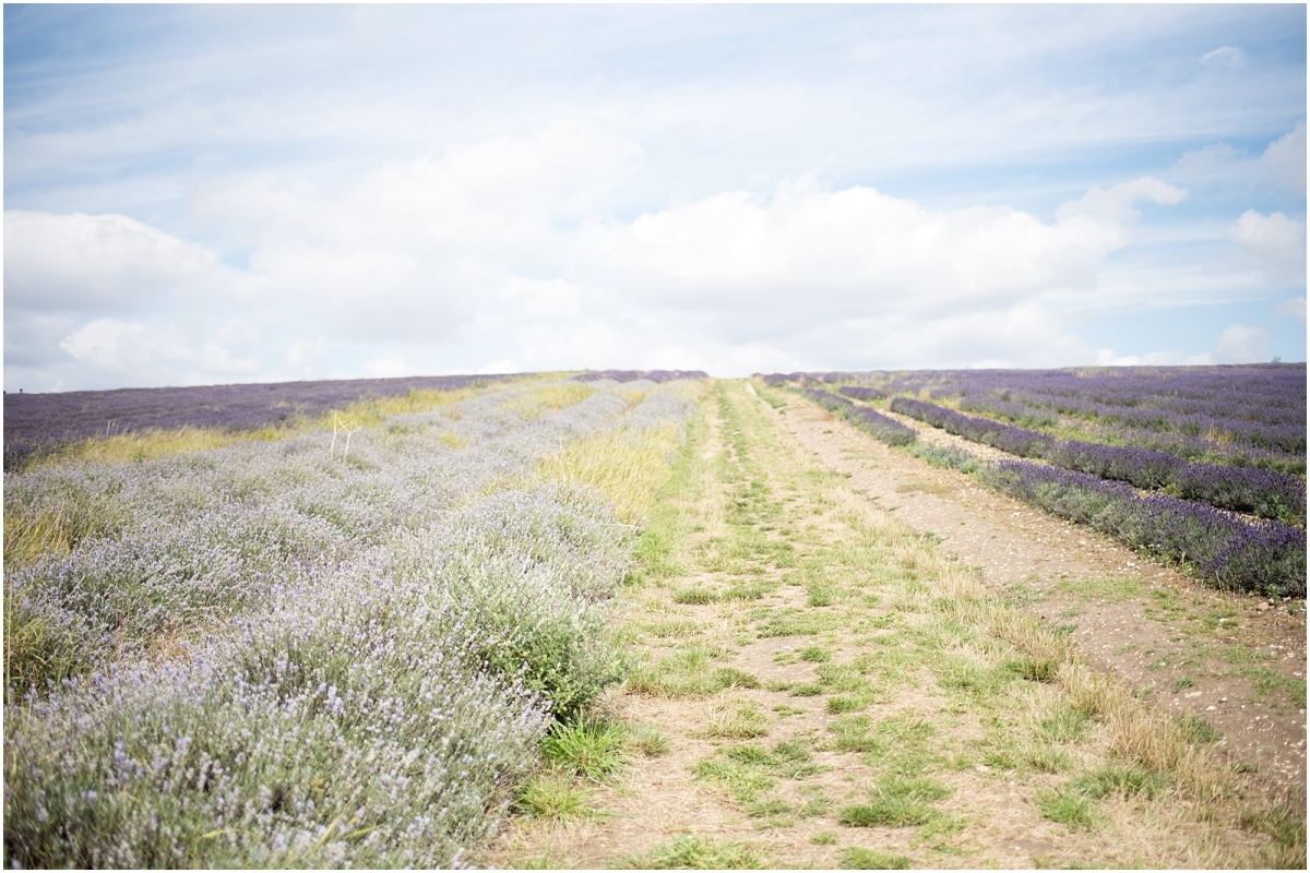 Hitchin lavender field